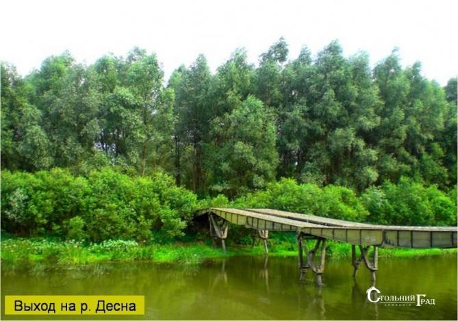 Продаж ділянки на березі Десни с. Пірново - АН Стольний Град фото 6