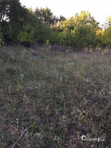 Продажа участка земли с домом-дачей село Черняхов - АН Стольный Град фото 9