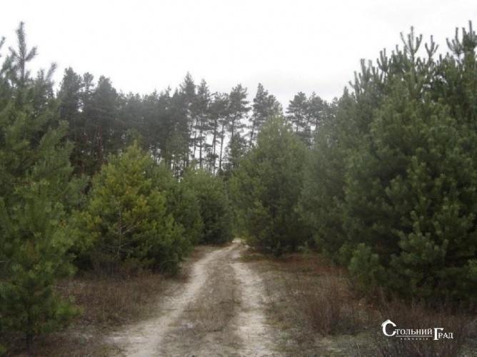 Продаж 15 га мальовничого лісу під Києвом - АН Стольний Град фото 7