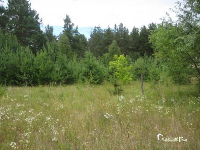 Продаж 15 га мальовничого лісу під Києвом - АН Стольний Град фото 9