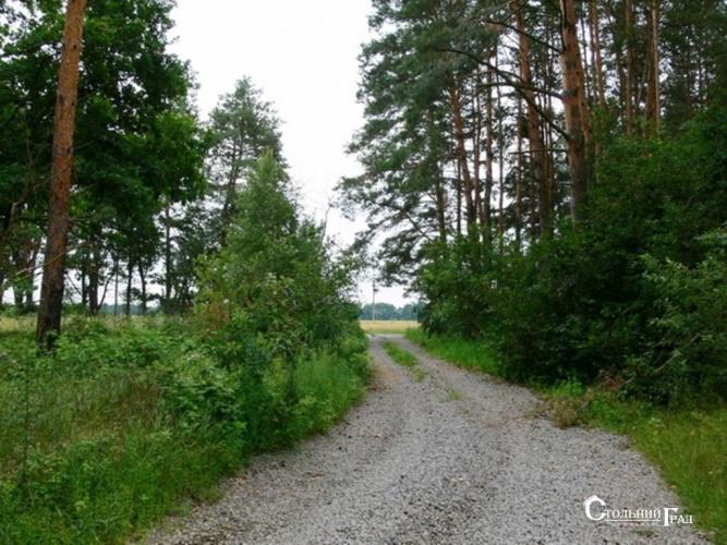 Продаж 15 га мальовничого лісу під Києвом - АН Стольний Град фото 10