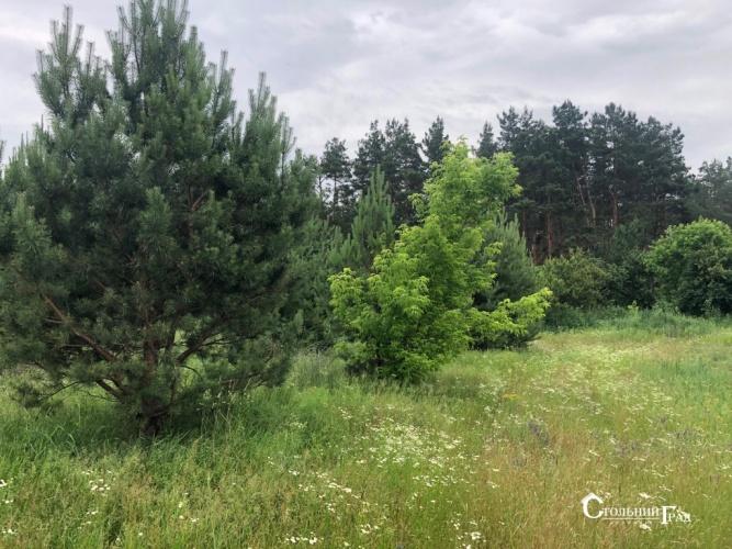 Продаж 15 га мальовничого лісу під Києвом - АН Стольний Град фото 1