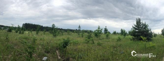 Продаж 15 га мальовничого лісу під Києвом - АН Стольний Град фото 11