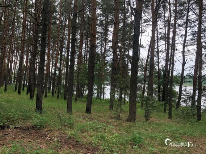 Продаж 15 га мальовничого лісу під Києвом - АН Стольний Град фото 14