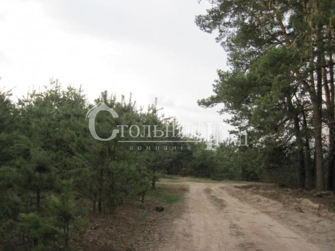Продажа участка 145 соток під котеджне будівництво - АН Стольний Град фото 9