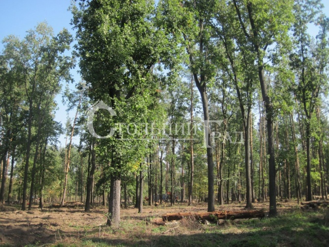 Plot in Roslavichi in a cottage town in the forest - Real Estate Stolny Grad photo 1