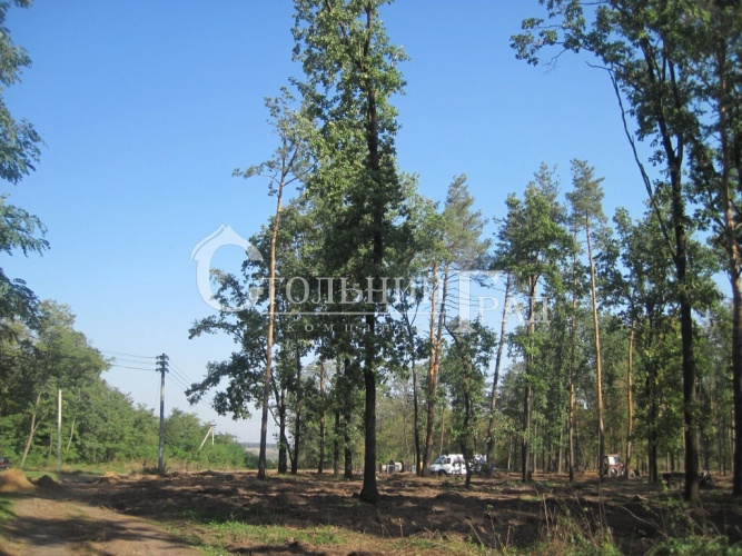 Plot in Roslavichi in a cottage town in the forest - Real Estate Stolny Grad photo 2