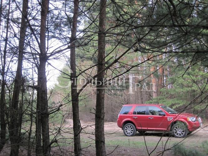 Продам ділянку в лісі під Броварами - АН Стольний Град фото 7