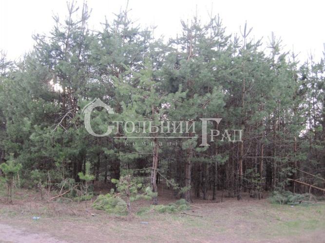 Продам ділянку в лісі під Броварами - АН Стольний Град фото 12