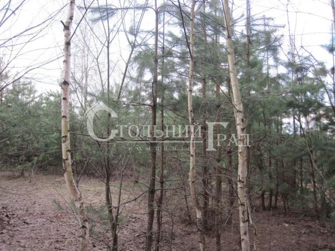 Продам ділянку в лісі під Броварами - АН Стольний Град фото 11