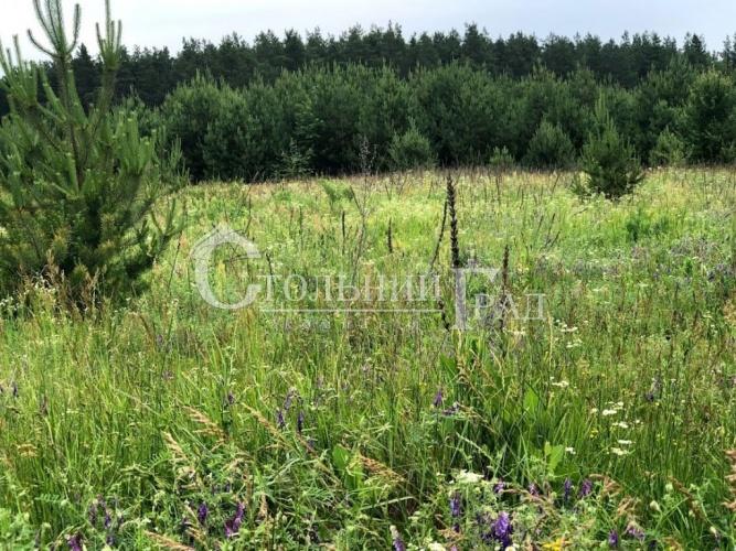 Продаж ділянки на узліссі соснового лісу - АН Стольний Град фото 1