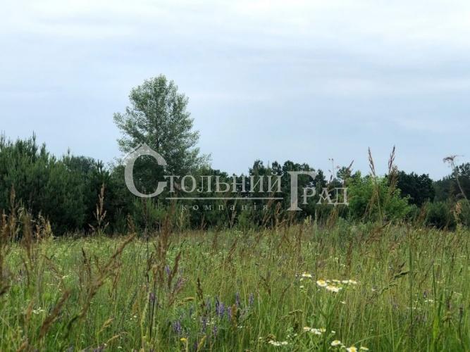 Продаж ділянки на узліссі соснового лісу - АН Стольний Град фото 2
