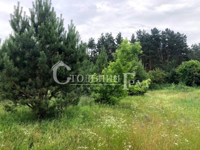 Продаж ділянки на узліссі соснового лісу - АН Стольний Град фото 3