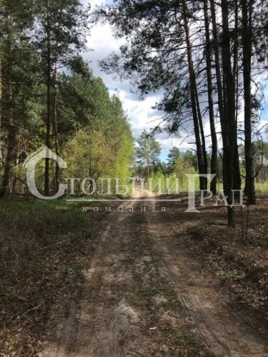 Продаж землі в мисливських угіддях в Вишгородському районі - АН Стольний Град фото 3