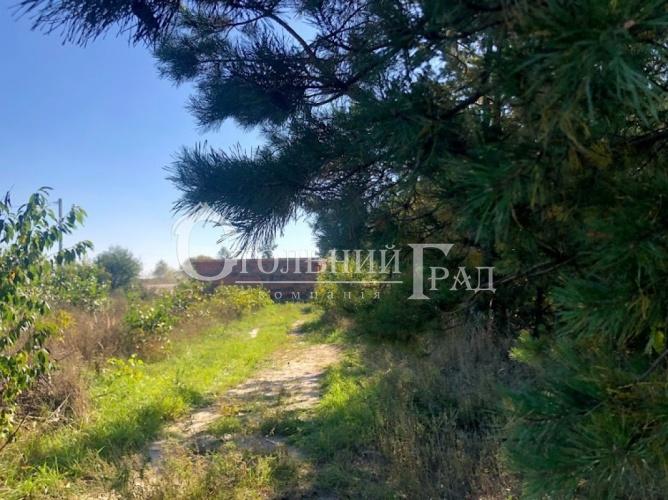 Продам участок в лесу под Броварами - АН Стольный Град фото 11