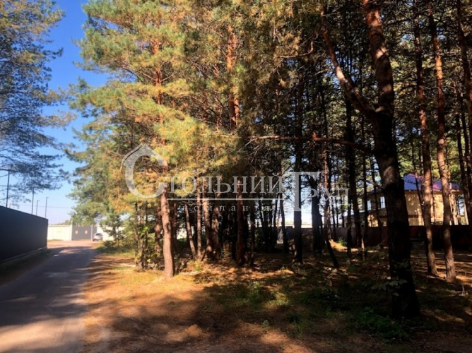 Продам участок в лесу под Броварами - АН Стольный Град фото 12