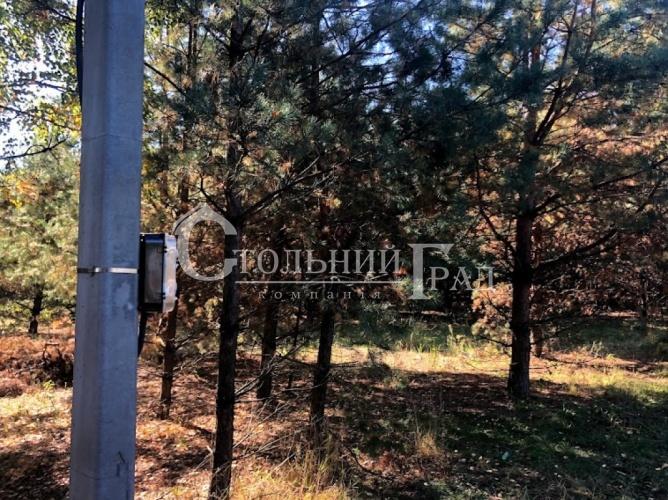 Продам участок в лесу под Броварами - АН Стольный Град фото 13