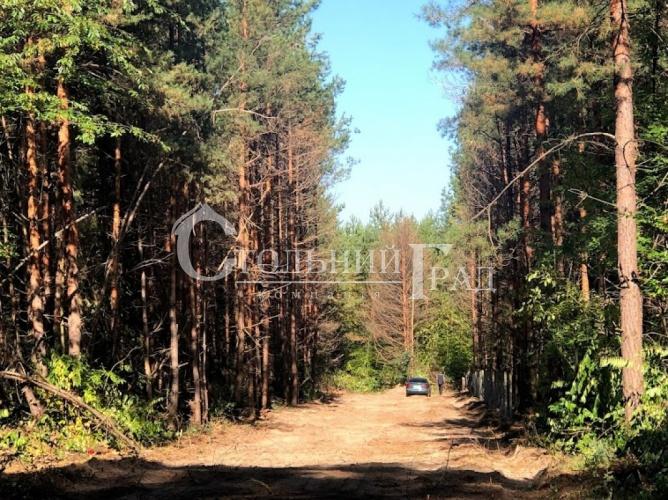 Продам участок в лесу под Броварами - АН Стольный Град фото 2